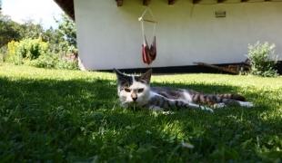Katze genießt den Tag in der Wiese